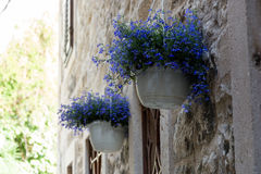 Hanging pot. Flowers hanging in pots at old town doorway Royalty Free Stock Photo