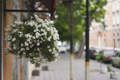 Hanging pot with flowers. Hanging pot of flowers on the wall of the house on a beautiful street Royalty Free Stock Image