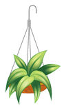 A hanging pot with a green plant Royalty Free Stock Photos