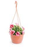 Hanging pot with petunias Stock Images