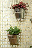 Hanging pot plants Royalty Free Stock Images