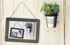 Hanging pot small plant, picture black and white on wooden wall background. Hanging pot with small plant on wooden wall background. Next picture in black and Royalty Free Stock Photo