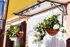 Hanging pot with white flowers in Burano, Italy Stock Images