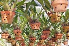 Hanging pots stock photos