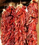 Hanging red chili ristas as a background Stock Photo