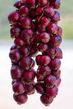 Hanging Red Onions Stock Photography