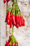 Hanging red peppers Royalty Free Stock Photos
