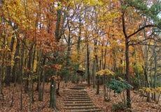 Hanging Rock State Park. Leaves changing colors in fall at Hanging Rock State Park near Danbury, North Carolina Stock Image