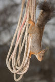 Hanging rope Royalty Free Stock Photo
