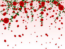 Hanging roses background Stock Photos