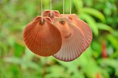 Hanging sea shell. Ringing sea shell mobile closeup Stock Photo