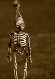 Hanging Skeleton Bones Royalty Free Stock Photo
