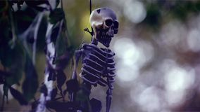 Hanging Skeleton. Halloween Skeleton Hanging on a Tree stock video footage