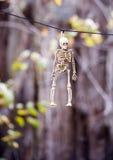 Hanging skeleton Stock Photo