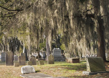 Hanging Spanish Moss royalty free stock photography