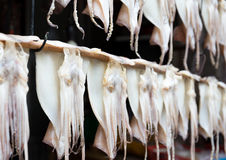Hanging squid for dehydration Royalty Free Stock Images
