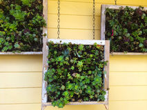 Hanging Succulent Boxes Royalty Free Stock Photo