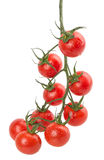 Hanging tomatoes Stock Images