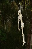 Hanging from a tree. A (toy) skeleton hanging from a tree next to a childrens tree house stock photos