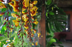 Hanging tropical flowers Royalty Free Stock Images