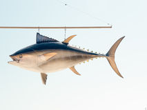 Hanging Tuna fish sign Royalty Free Stock Image
