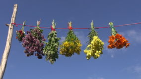 Hanging various fresh medical herb bunch on string stock video footage