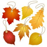 Hanging vector tags with autumn leaves. Stock Images