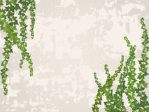 Hanging vines on the background of old stucco wall. Vector background Stock Photos