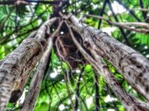 Hanging vines Royalty Free Stock Image