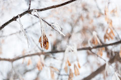 Hanging winter jewelles Royalty Free Stock Images