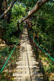 Hanging wooden bridge path through big tree branch jungle with rope rail, tree leaves and plant shadow Stock Image