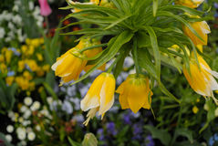 Yellow hanging flowers stock image image of stone flowers 89082689 hanging yellow flowers royalty free stock photos mightylinksfo