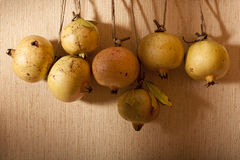 Hanging Yellow Pomegranates Stock Photo