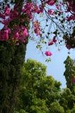 Hangings cor-de-rosa Imagens de Stock Royalty Free