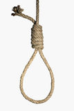 Hangman's noose on white background Stock Image
