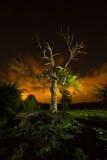 Hangman's tree Stock Photography