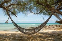 Hangmat in de schaduwen van palmen op het strand Stock Foto