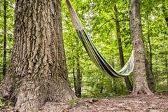 Hangmat in het Bos Royalty-vrije Stock Afbeelding