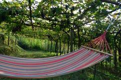 Hangmat onder de wijnen Royalty-vrije Stock Fotografie