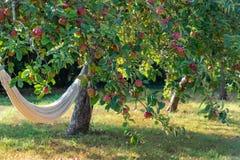 Hangmat onder een appelboom royalty-vrije stock afbeeldingen