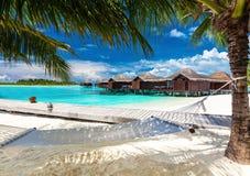 Hangmat tussen palmen op tropisch strand Stock Foto's