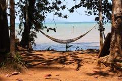 Hangmat tussen palmtrees Stock Fotografie
