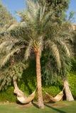 Hangmatten en palmen. Royalty-vrije Stock Afbeelding