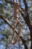 Hangmen Noose. Hanging outside in a tree Royalty Free Stock Image