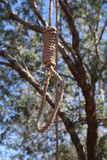 Hangmen Noose. Hanging outside in a tree Royalty Free Stock Images