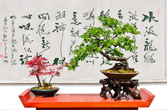 Hangzhou botanical garden of bonsai exhibition Royalty Free Stock Photo
