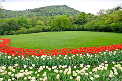 Hangzhou prince bay park blooming tulips Royalty Free Stock Photos