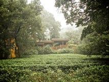 Hangzhou tea terraces. Hangzhou is a city in zhejiang province china Royalty Free Stock Images
