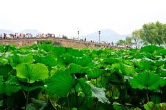 Hangzhou västra Lake Royaltyfria Bilder