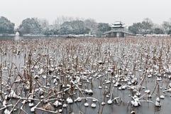 Hangzhou vinterlandskap Arkivbilder